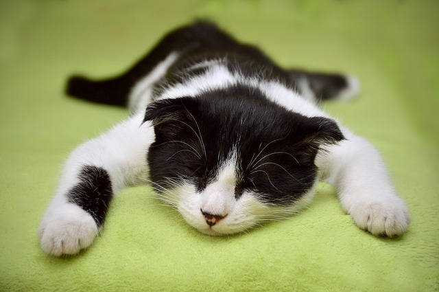 cat-2605502_640