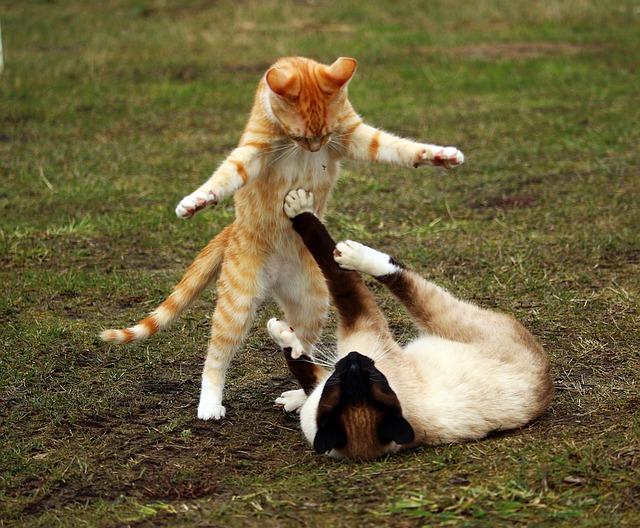 cat-1234950_640